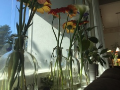 A lot of flowers at home.